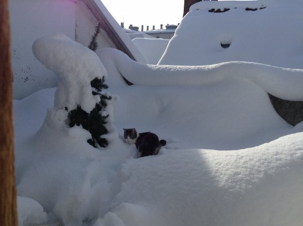 Après 4 jours de neige, un peu de répit, il fait soleil et très froid......et le plus téméraire à sortir fut Hubert.....