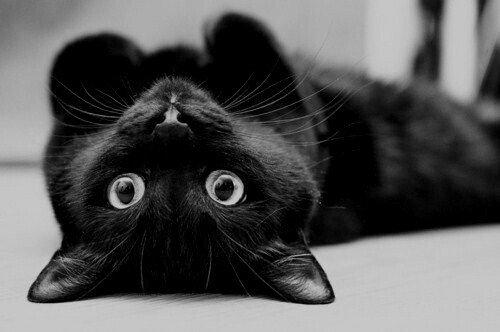 8 comportements de votre chat qui vous prouveront qu'il vous adore ! La 7 est bien évidemment connue de tous