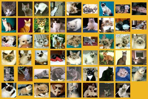 Les Gens qui aiment les Chats....