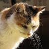 Le chat sénile : comment aider et apaiser son animal âgé