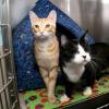 La belle histoire de Ray le chat aveugle et son meilleur ami Newton devenu ses yeux