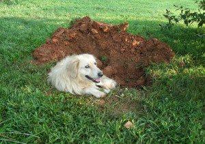 Temps chaud, canicule : protéger son chat ou son chien