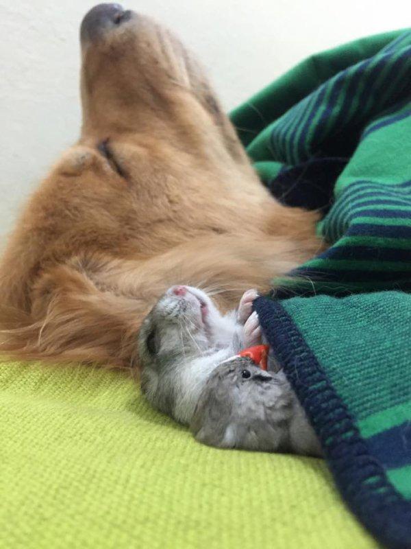 Le chien, le hamster et les 8 oiseaux : une famille incroyable