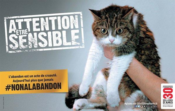 N'abandonnez pas votre chat!!!!