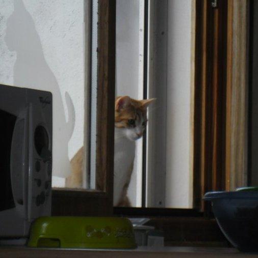 Les Chats sont mystérieux, élégants, magnifiques. Les chats sont ridicules,imprévisibles, taquins...et profondément sésobéissants. LES CHATS SONT CE QU'ILS ONT DECIDE D' ÊTRE.
