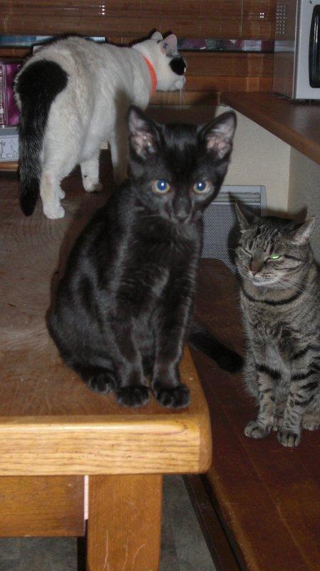 Rappelez-vous ! je vous ai dit Merlin m'avait choisie! et bien, il est vrai qu'il est différent des autres chats et qu'on fusionne tous les deux, et, moi aussi je lui dis quand je pars, j'ignore pourquoi?mais j'éprouvais le besoin de lui dire....maintenant je comprends mieux!