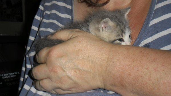 Comment une créature si petite peut-elle apporter autant de changement dans notre vie????