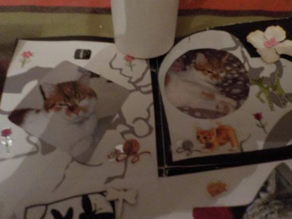 Scrap,chats en hommage à mes amours absents et présents