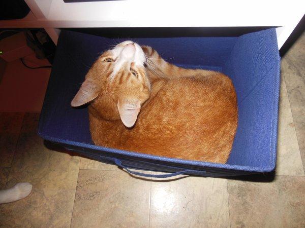 Nous sommes mal à l'aise avec les chats car ils sont tout ce que nous ne sommes pas: sûrs d'eux, élégants dans tout ce qu'ils font, calmes, assurés!