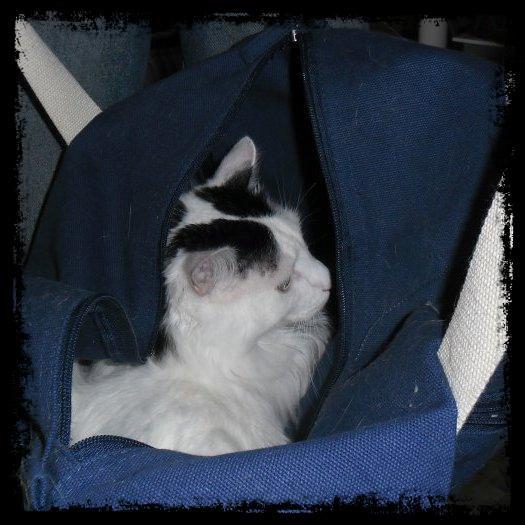 Pour des esprits obscurs, tous les Chats se ressemblent ! Mais pour celui qui aime les Chats, ils sont toujours incroyablement et particulièrement Uniques!!
