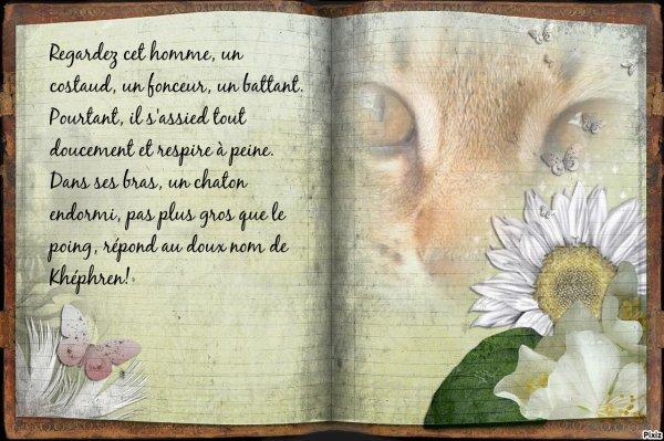 """Bienvenue à Khéphren, un nouveau petit chat chez """"bastet4"""", il est trop chou et a sa renommée"""