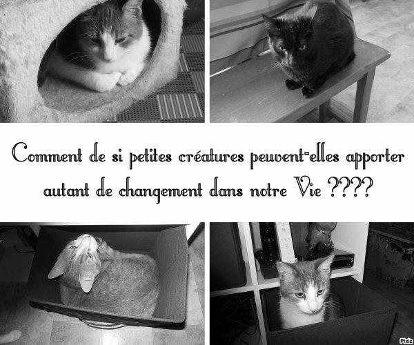 Citation Féline