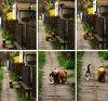 Chaque jour, le chien Kira vient chercher son ami Mitsu. Les deux partent ensemble pour une petite balade d'une heure. Et c'est tous les jours le même rituel !