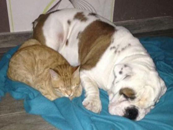 Les plus belles photos d'animaux qui s'aiment comme chien et chat !