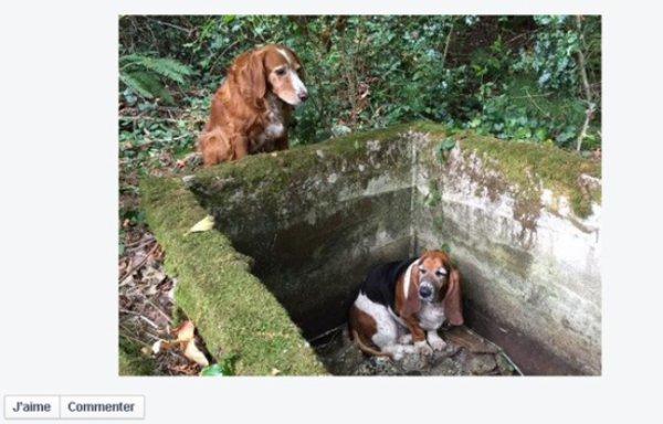 VIDEO. Etats-Unis: Un chien veille une semaine entière sur son compagnon piégé