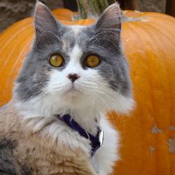Comment protéger votre chat des dangers de l'automne ?