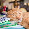 5 choses à savoir sur le sommeil des chats