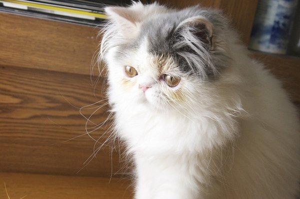 6 choses à savoir sur l'odorat du chat