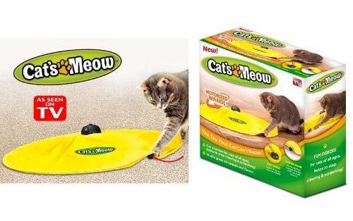 7 raisons pour lesquelles votre chat aime vous lécher!!!!