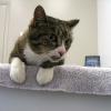 Le Sida du chat : ce qu'il faut savoir sur le FIV