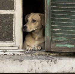 Les 6 choses que vivent tous ceux qui sont en appartement avec un chien