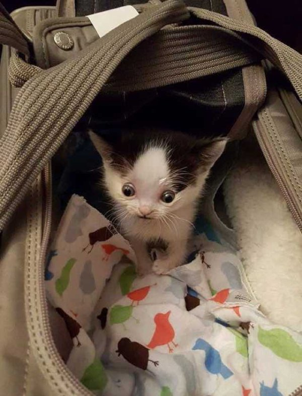 Cette femme sauve la vie d'un chaton condamné à être euthanasié