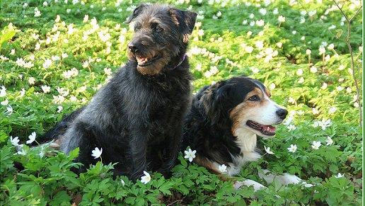 10 preuves qu'adopter un chien c'est comme adopter un mec! assez d'accord....