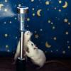 Elle photographie des animaux libérés des laboratoires et leur offre une seconde chance!