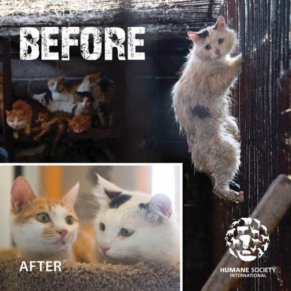 L'incroyable métamorphose d'Huru, chat sauvé du massacre de Yulin
