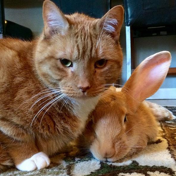 Le chat qui a un lapin géant pour frère jumeau