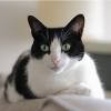 Oui, les chats savent lire sur le visage de leurs humains