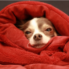 Comment soigner un chien enrhumé ?
