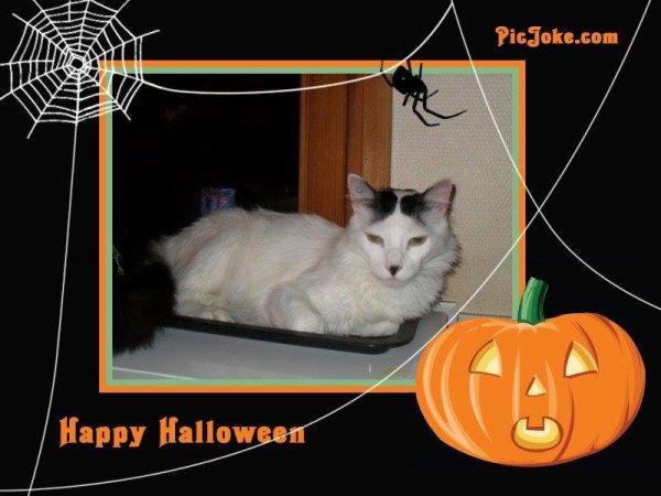 Joyeux Halloween à Tous