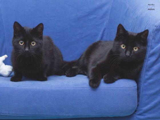 Des superstitions illustrées par.... des chats noirs !