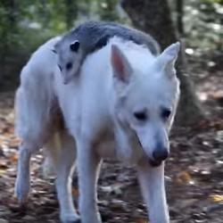 Quand un chien et un opossum deviennent les meilleurs amis du monde