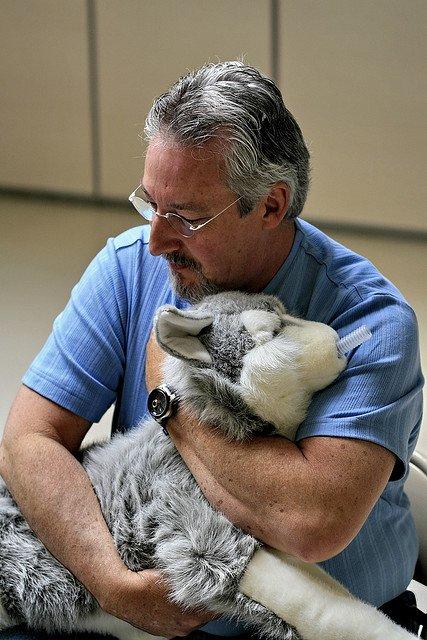 Le secourisme canin : apprenez les gestes qui peuvent sauver votre chien