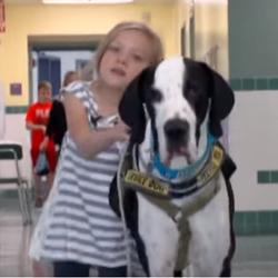 George, le Dogue allemand qui a changé la vie d'une petite fille de 11 ans