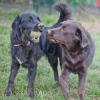 AVA, une maison de retraite pour sauver les vieux animaux de l'euthanasie