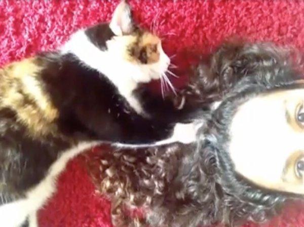 Vous devez absolument savoir ce que ça signifie quand votre chat vous mordille!
