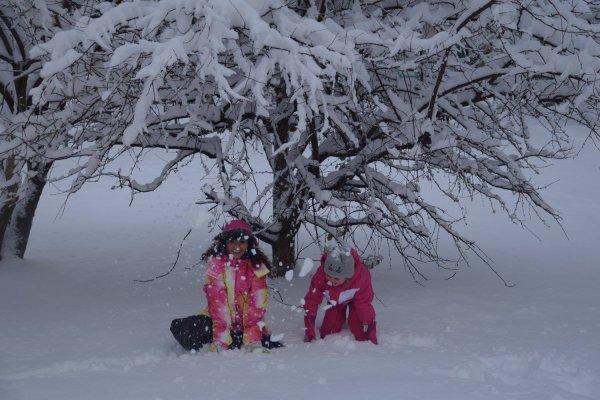 """Premières neiges et chien de neige """"Malika"""""""