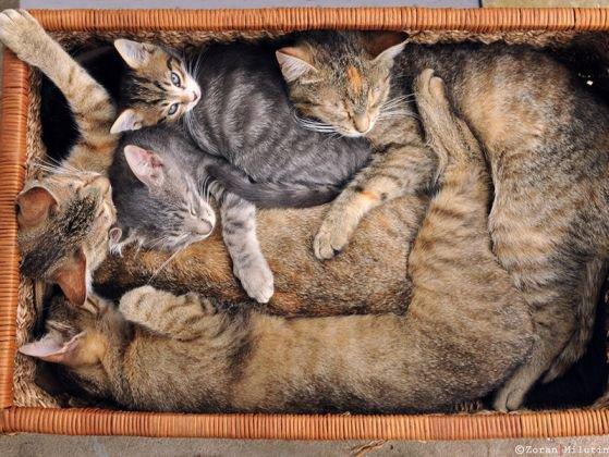 Les 10 meilleures techniques des chats pour se réchauffer pendant l'hiver