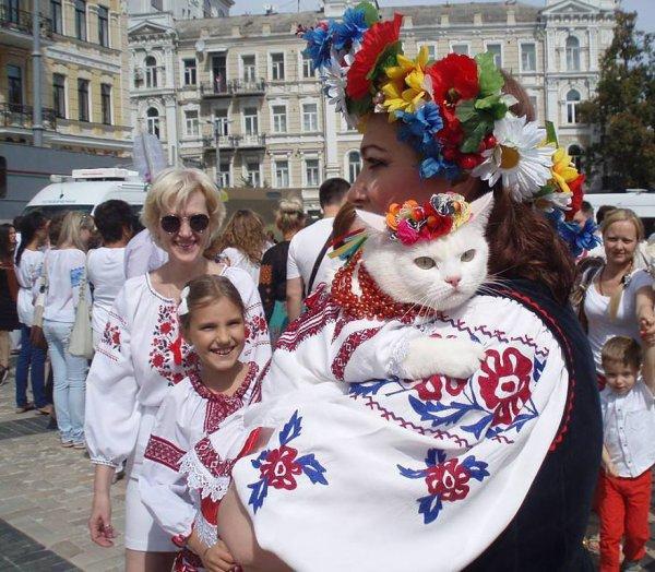 La Place des Chats en Russie