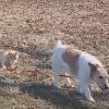 Le chat qui veut garder son chien près de lui