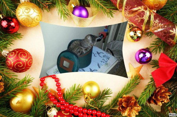 """Mardi 8 décembre 2015: l'heureuse élue est """"Rasza94"""" à qui je souhaite un Bon Anniversaire!"""