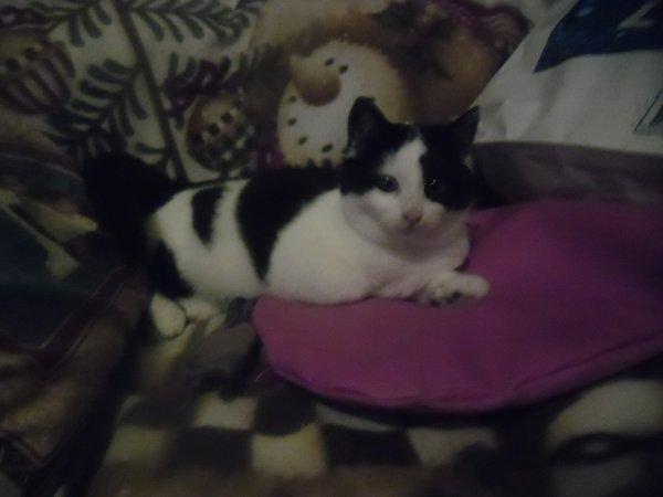 Et, bien pour notre Pomponnette retour à la case départ, elle pleurait trop à la porte, alors elle me l'a ramenée à la maison et apparement trop heureuse de rentrer car elle a filé vers les copains et a entamé une partie endiablée avec eux, ça courait de partout; alors, résolution je la garde, déjà que j'ai eu du mal à la laisser partir, et, me voilà donc à 8 chats, mais, un de plus vaut mieux qu'un de moins....