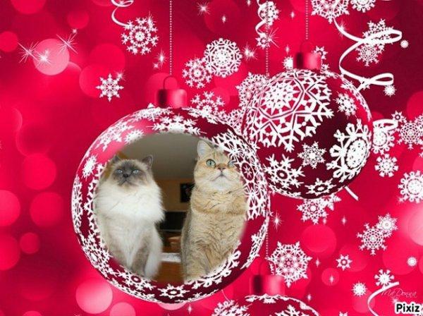 """mercredi 16 décembre 2015: l'heureuse élue est """" ANNE-ET-SES-5-AMOURS"""""""