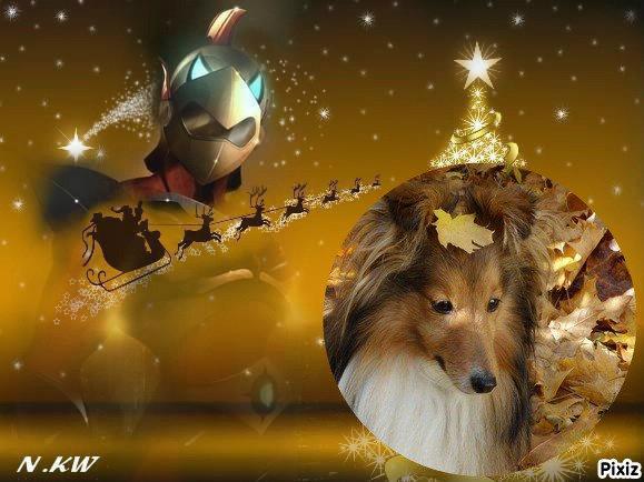 """Dimanche 20 décembre 2015: l'heureuse élue est ma préférée, cette famille est formidable pour tous les animaux, beaucoup d'empathie, de respect pour tout ce qui les entoure, beaucoup de compassion les anime, j'adore cette famille """"Irisshetland"""" à qui je souhaite beaucoup de jours en plus à leur jolie shetland au doux nom d'Iris"""