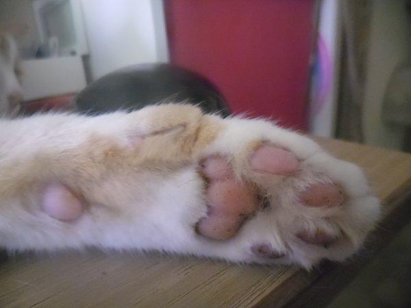 Je te raconte Caramel.....ce chat qui m'a fait pleurer à son arrivée!