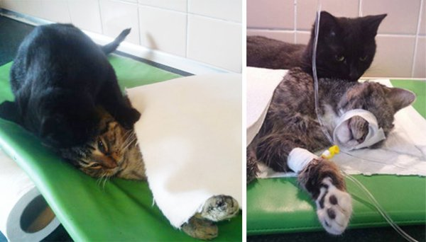 "Le chat infirmier ""Rademenes"""