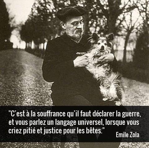 """Peu de gens connaissent l'engagement d'Émile Zola en faveur des animaux, une sensibilité qui s'est reflétée dans ses romans et tout au long de sa vie personnelle. En 1896, il publie une tribune dans les colonnes du Figaro : """"Pourquoi la souffrance d'une bête me bouleverse-t-elle ainsi? Pourquoi ne puis-je supporter l'idée qu'une bête souffre, au point de me relever la nuit, l'hiver, pour m'assurer que mon chat a bien sa tasse d'eau ? [...] Pourquoi les bêtes sont-elles toutes de ma famille, comme les hommes, autant que les hommes ?  [...] Alors, est-ce qu'on ne pourrait pas, de nation à nation, commencer par tomber d'accord sur l'amour qu'on doit aux bêtes ? [...] Et cela, simplement, au nom de la souffrance, pour tuer la souffrance, l'abominable souffrance dont vit la nature et que l'humanité devrait s'efforcer de réduire le plus possible, d'une lutte continue, la seule lutte à laquelle il serait sage de s'entêter"""""""